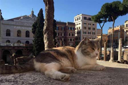 rome2019-gatto-romano