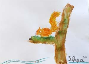 ecureuil-solena5a
